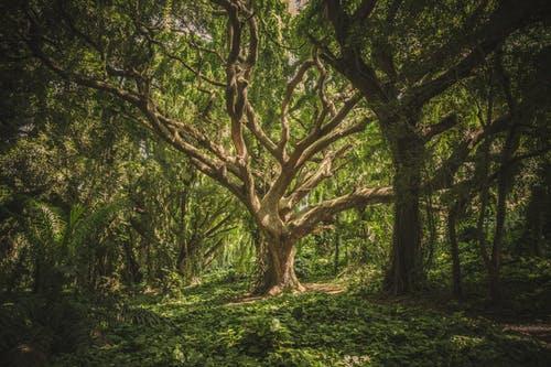 drvo je jedan od 5 feng shui elemenata, kreira potencijal rasta i zdravlja